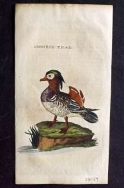 Brightly (Pub) 1815 Hand Col Bird Print. Chinese Teal